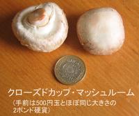 Mushroom_closed