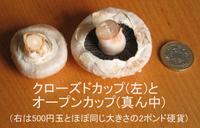 Mushroom_closedvsopen