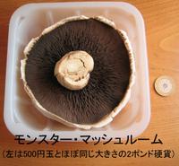Mushroom_monster_2