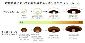 Mushroom_name_4