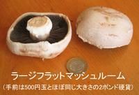 Mushroom_open_flat