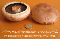 Mushroom_portabello