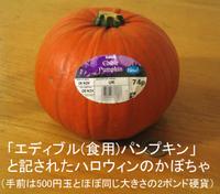 Kabocha_pumpkin