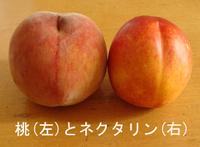 Nrctarine_peach