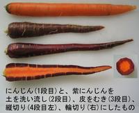 Carrot_purple_inside_1