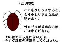 Cockroach_3_1