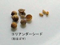 Coriander_seed