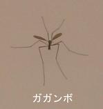 Cranefly_2