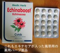 Echinacea_cold_1