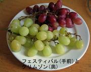 Grape_festivalandcrimson_1