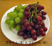 Grape_primeand_flame_1