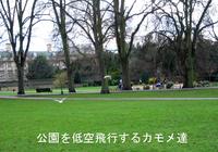 Gull_park_1