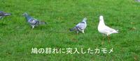 Gull_vsdove