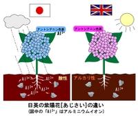 Hydrangea_soil