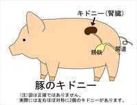 Kidney_pork