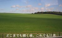 Lawn_green