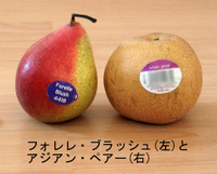Pear_asian_etc