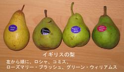 Pear_comice_etc