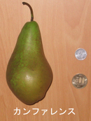 Pear_conference
