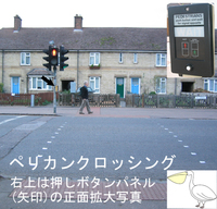 Pedestrian_crossing_pelican
