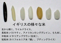 Rice_variety
