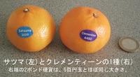 Satsuma_and_clementine