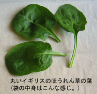 Spinach_leaves