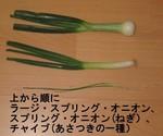 Spring_onion_comparison