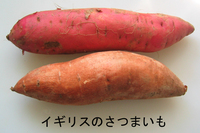 Sweet_potato_1