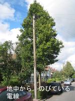 Telegraph_pole_underground_1