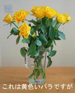 Valentine_rose_3