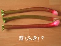 What_rhubarb